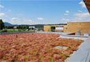 ECOVEGETAL FLORATHERM : pour une toiture végétale isolante