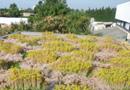Graviland-Tech : la toiture-terrasse végétalisée avec arrosage automatisé par Siplast - Icopal