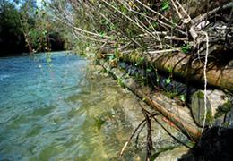 Ouvrages bois : solutions pour le soutènement et la correction torrentielle par Office National des Forêts (ONF)