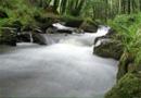 Gérer durablement les espaces naturels par TBM, Bureau d'études