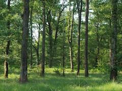 Forêt, bois, sylviculture : valorisez vos chantiers forestiers !