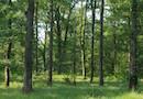 Forêt, bois, sylviculture : valorisez vos chantiers forestiers !  par Office National des Forêts