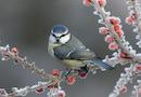 Environnement, biodiversit� et risques naturels : l