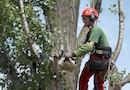 Arbre Conseil® : nos experts sécurisent et valorisent vos espaces arborés par Office National des Forêts