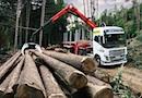 PALFORET : ensembles complets Grue / Remorque-Grumier pour le transport de bois par PALFINGER France