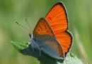 Aménagement : l'accompagnement du volet Milieu naturel de vos projets par NCA environnement