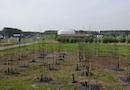Phyto-management : du nouveau pour la dépollution de sites industriels par Tauw