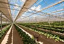 Serre photovoltaïque : optez pour un outil agricole optimal dans la durée par Reden Solar