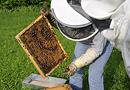 Ruches d'entreprise : un atout pour fédérer ses parties-prenantes par BeeOdiversity