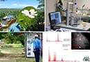 Démocratiser la biosurveillance de la qualité de l'air en milieu tropical par Pollutec