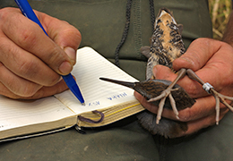 Qualification OPQIBI : étude de la biodiversité et des écosystèmes par OPQIBI