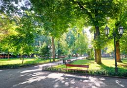 Aménagement : implanter une forêt urbaine sur son territoire