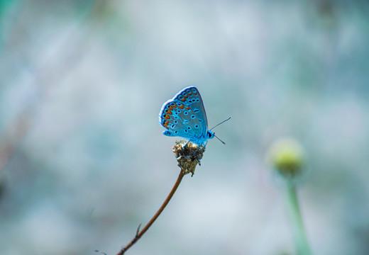 Votre conseil juridique en matière d'espèces protégées et de biodiversité