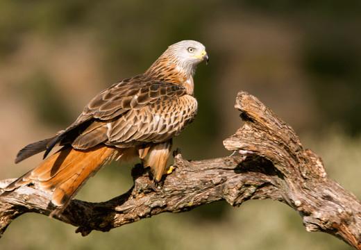 Votre conseil juridique en matière de biodiversité et d'espèces protégées