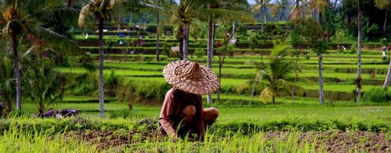 L'agro-écologie peut doubler la production alimentaire mondiale en 10 ans, selon l'ONU