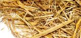 Agrocarburants : les enzymes au cœur de la recherche