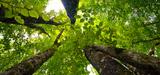 Gestion durable des forêts : vers des mesures contraignantes au sein de l'UE ?