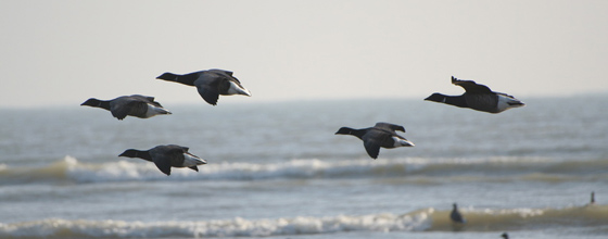 Les pertes d'habitats naturels menacent les oiseaux migrateurs