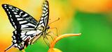 Biodiversité : lancement d'une stratégie nationale de reconquête