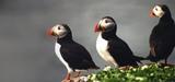 France, tes oiseaux disparaissent