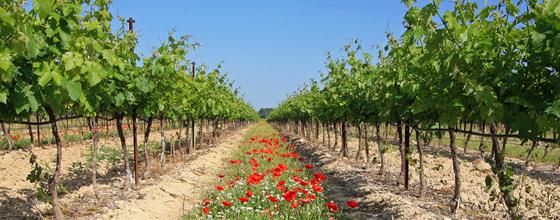 Exploitations agricoles : la certification environnementale est née