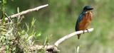 Biodiversité : un premier compromis trouvé sur la Stratégie européenne