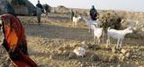 Sécheresse en Afrique de l'Est : une crise humanitaire et climatique
