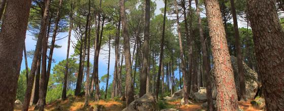 Comment adapter les forêts au changement climatique ?