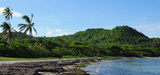 En Martinique, c'est l'algue jaune qui prolifère…
