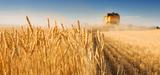 Famine en Afrique de l'Est : les agrocarburants de première génération mis en cause