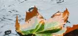 Une amélioration insuffisante de l'acidité des eaux de pluie en France
