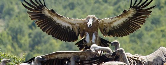 """Résultat de recherche d'images pour """"vautours"""""""
