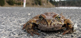 La fragmentation des espaces naturels devient alarmante en Europe
