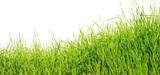 Face à la tourmente économique, la croissance de demain sera-t-elle verte ?