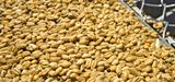 Produits phytosanitaires : des salariés de l'agroalimentaire accusent