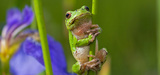 Préservation de la biodiversité : le CAC 40 commence à y penser