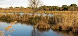 Les conservatoires régionaux d'espaces naturels mieux reconnus