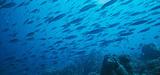 Aires marines protégées : la France, bonne élève