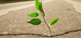 La délicate réduction des aides néfastes à la biodiversité