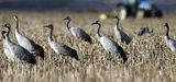 Une situation contrastée pour les oiseaux de France