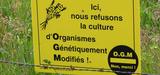 Législation des OGM : une nécessaire révision des processus d'autorisation