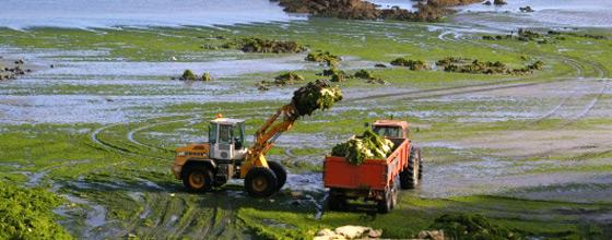 Algues vertes : l'agriculture finistérienne refuse de poursuivre la mise en œuvre du Plan d'actions