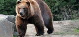 Le Parlement europ�en rappelle � la France son obligation de pr�servation de l'ours brun