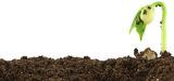 L'avenir de l'humanité passe par la restauration de l'humus des sols
