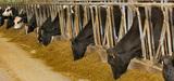 """Elevages de vaches laitières : l'arrêté """"enregistrement"""" est paru"""
