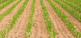 Un bilan des sols en France ''nuancé''