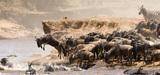 Sécuriser les réseaux écologiques pour préserver les espèces migratrices