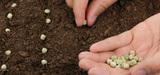 Le Parlement vote pour la protection de la propriété intellectuelle des semences végétales