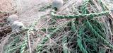 Ressources halieutiques : un nécessaire renforcement du cadre réglementaire européen