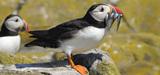 Les oiseaux marins, victimes collatérales de la surpêche